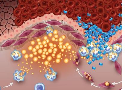辛辛那提大学研究发现女性脂肪细胞具有更高的疾病保护