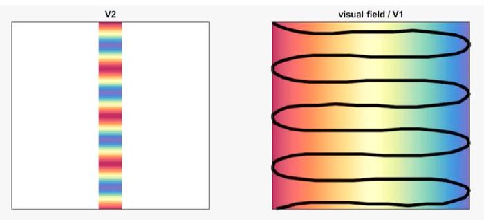 绘制视觉空间组织的新路线