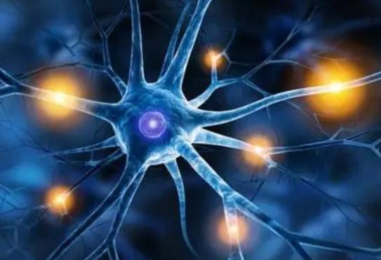 肾主动脉加分支消融治疗顽固性高血压伴肾去神经支配