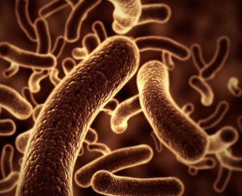 了解我们的肠道微生物群如何与我们的免疫系统进行交流