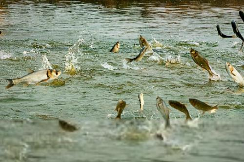 鱼类养殖必须跟上世界需求