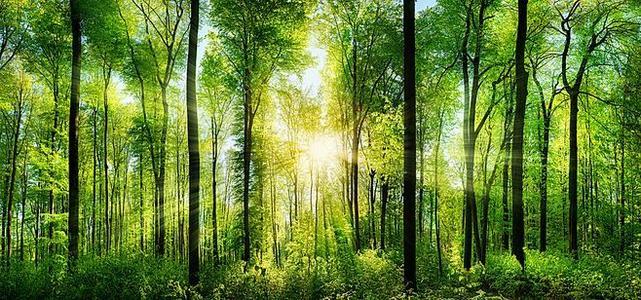 结构复杂的森林更适合碳封存
