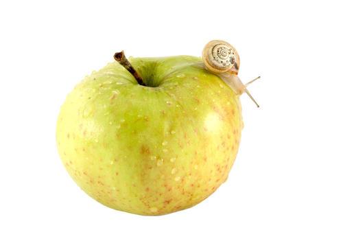 基因组研究揭示了侵入性苹果蜗牛的神秘面纱