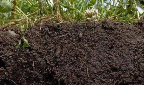 土壤特性预测慢性消耗疾病持续性