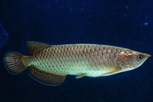 研究发现吃鱼可以改善儿童的智商