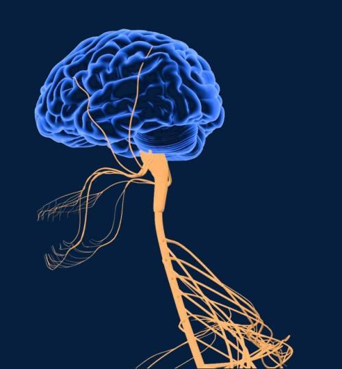 寄生虫操纵是否影响人类神经系统的进化