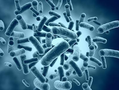 适应牛内生活可能会驱使大肠杆菌产生有害特征