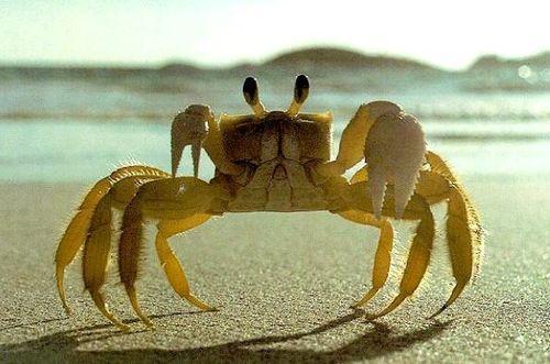 分离的极化和亮度通道使螃蟹比捕食者更具优势