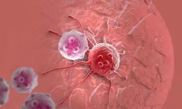 C点显示强大的肿瘤杀伤效果