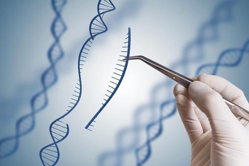 基因编辑治疗小鼠遗传性血液病