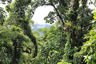 来自大西洋雨林树的Biocompound对抗寄生虫