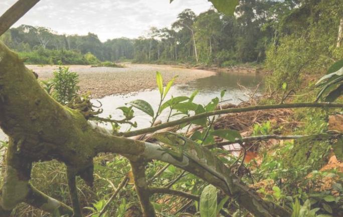 荒野地区的灭绝风险减半