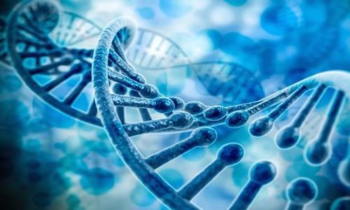 基因组迁移分析显示抗生素抗性从人类传播到动物