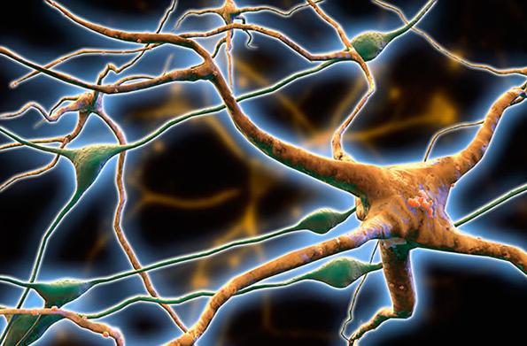 ions病毒阻塞神经退行性疾病的大脑细胞运输