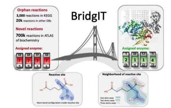 BridgIT识别用于孤儿和新型酶反应的候选基因和催化蛋白