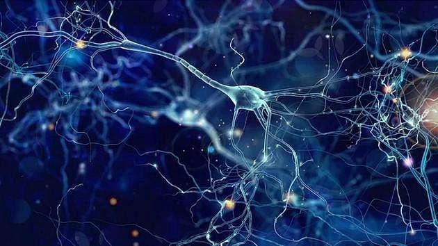 思维神经元帮助我们模仿他人的心态