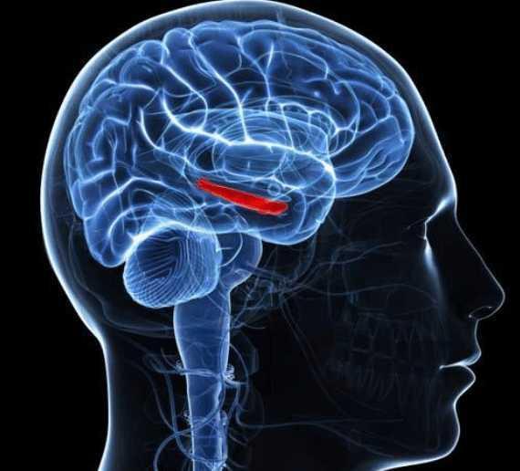 患有精神病症状青少年的海马体急剧收缩