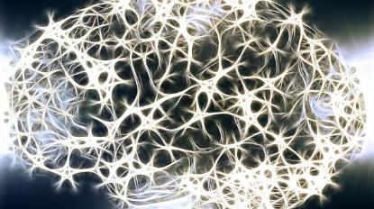研究揭示了关于多种细胞类型如何驱动脑回路形成和新颖分子见解