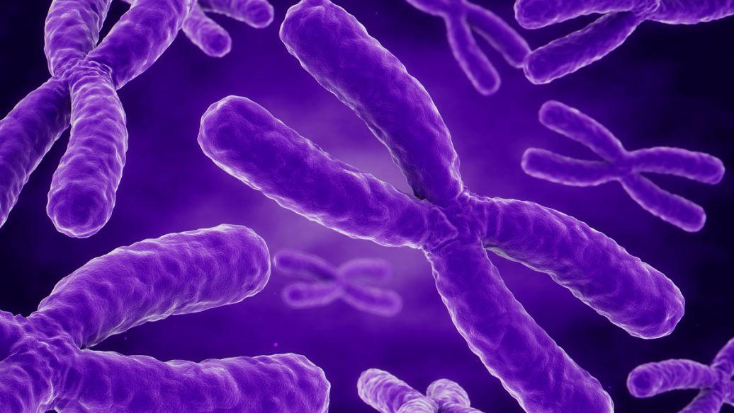 检测人尿中微囊藻毒素和结核菌素的新方法