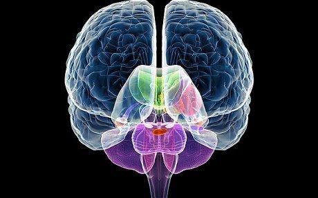 孪生研究有助于揭示人脑的遗传蓝图