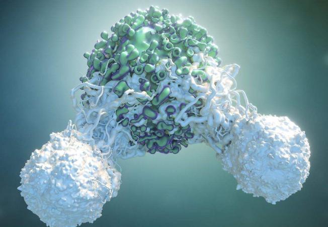 免疫疗法和靶向疗法可改善黑色素瘤脑转移患者的预后