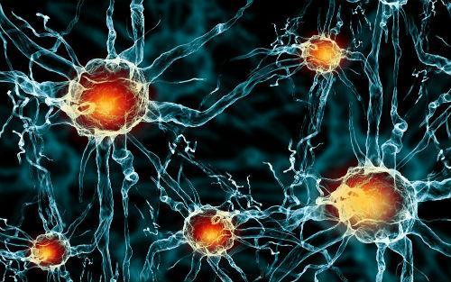 诱导神经干细胞移植可改善小鼠的中风恢复