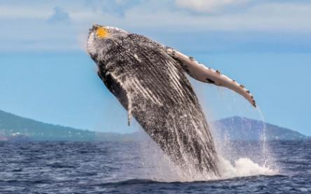 研究人员解释说 死亡的超是造成海洋沉入地幔的部分原因