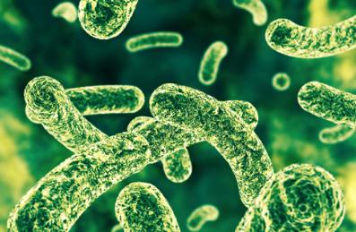 肠道中的微生物可增强免疫系统抵抗疱疹病毒的能力
