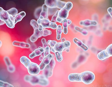 盐水池微生物中的活性化合物对某些癌症具有化学治疗作用
