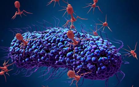 研究表明病毒如何影响肠道中的细菌种群