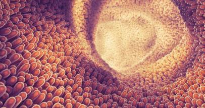 关键蛋白可以阻止细菌感染而不触发细胞死亡