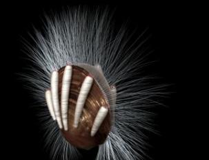 寒武纪化石显示了最古老的寄生虫实例