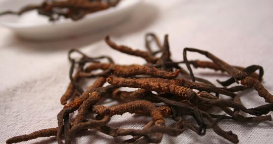 研究人员发现虫草可潜在地用于治疗肝脂肪