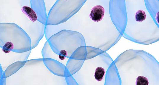 研究发现卵细胞会选择健康的细胞成分传给下一代