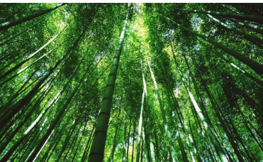 研究证实叶子是环境健康的复杂传感器
