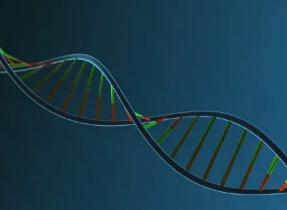 研究发现蛋白质在基因表达中的作用