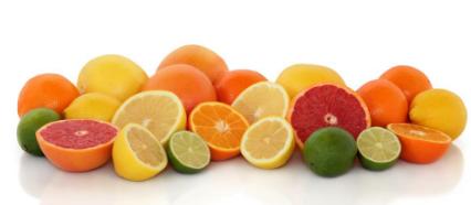 橙皮素对体内抗痫性发作的保护作用