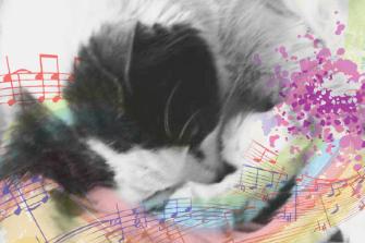猫特有的音乐可以降低猫的应激相关行为