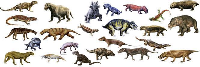 研究表明进化并不总是意味着更多的复杂性