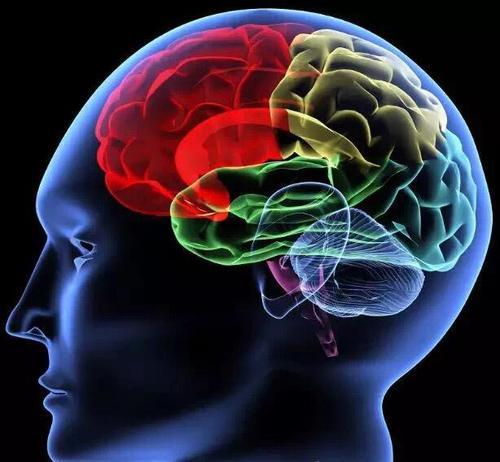 研究人员使用X射线绘制大脑图