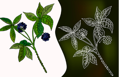 研究人员发现西伯利亚人参的植物化学和抗癌作用