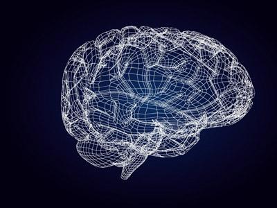 研究人员对大脑中表达的所有蛋白质进行了全面概述