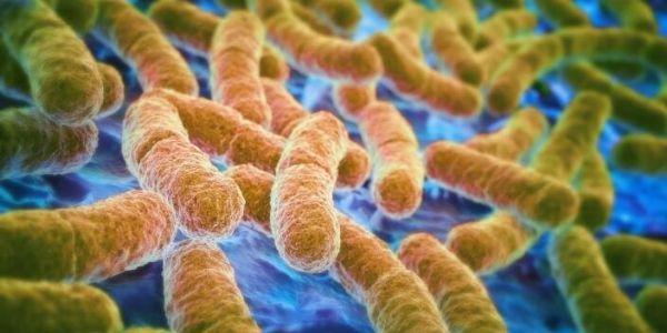 研究人员借助微生物群抗击细菌过度感染