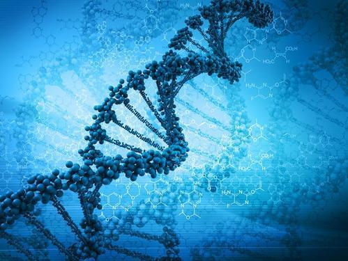 新研究解释了酶引起DNA形成液滴反应的机制