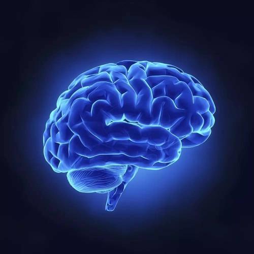 人体的需求如何影响大脑处理视觉食物线索的方式