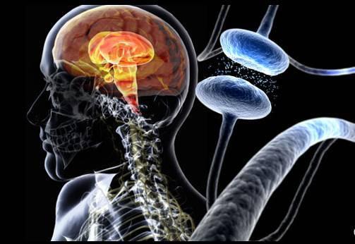 研究人员更准确地定义多巴胺神经元在运动中的作用