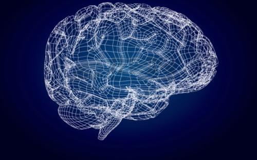 研究人员对人类大脑发育至关重要的基因