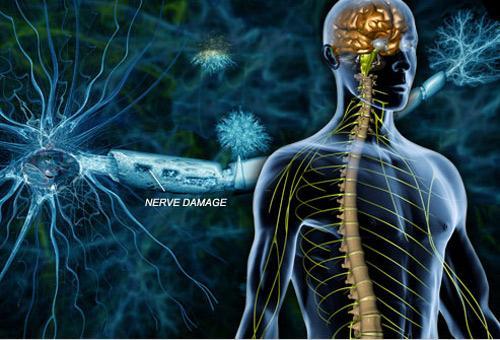 确定中风后脑修复的主要成分