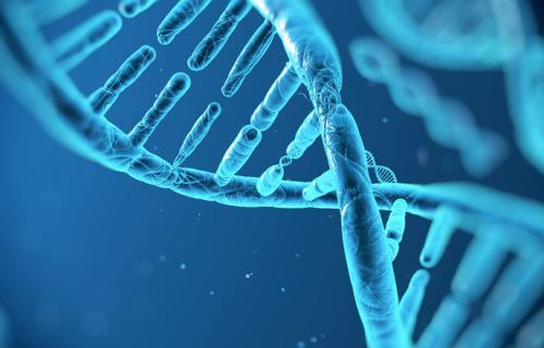 刘文革团队对西瓜3个农艺性状的重要功能基因进行了挖掘和功能分析