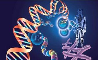 那么有哪些遗传疾病的遗传概率高